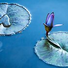 Water Lily by J. Day