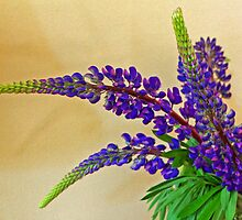 Wild Lupin by Lesliebc