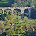 Cannington Viaduct, Uplyme Devon. UK by lynn carter