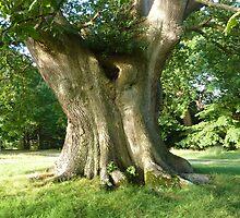 pedunculate oak by shireengol