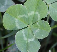 Luck of the Clover by Sheryl Hopkins