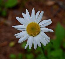 Little Daisy by rosaliemcm