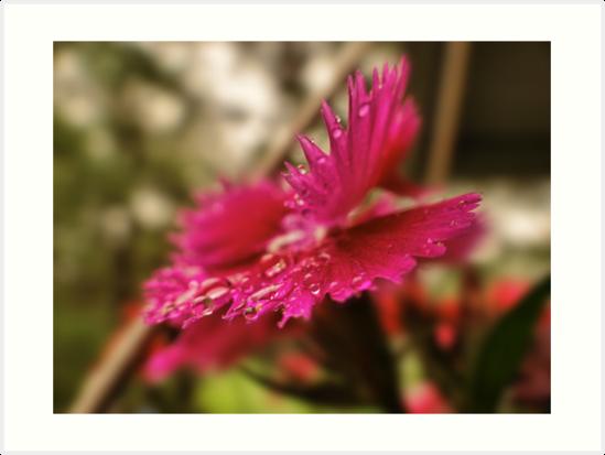 Dyanthis by vigor