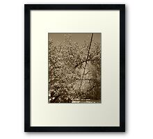 Nature Favorites I Framed Print