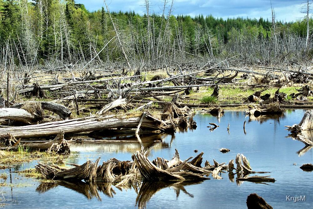 Peace on a Marsh by KrysM