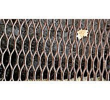 Fall and Grated Photographic Print