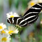 Butterfly Dreams  by Saija  Lehtonen