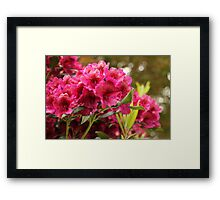 Resplendent With Magenta and Red Framed Print