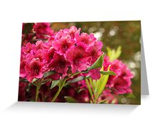 Resplendent With Magenta and Red Greeting Card