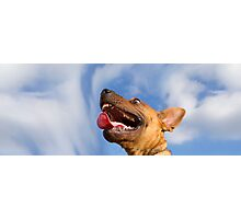 Dogs with game face on .16 Photographic Print