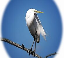 Egret Portrait by Sharon Woerner