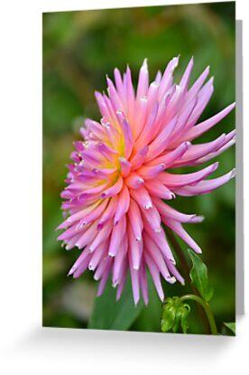 Beautiful in Pink by Deborah Clearwater