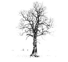 The Lonley Tree Photographic Print