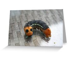 Oleander Hawk Moth Larvae Greeting Card