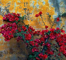 Mission Wall And Bougainvillea by Larry3