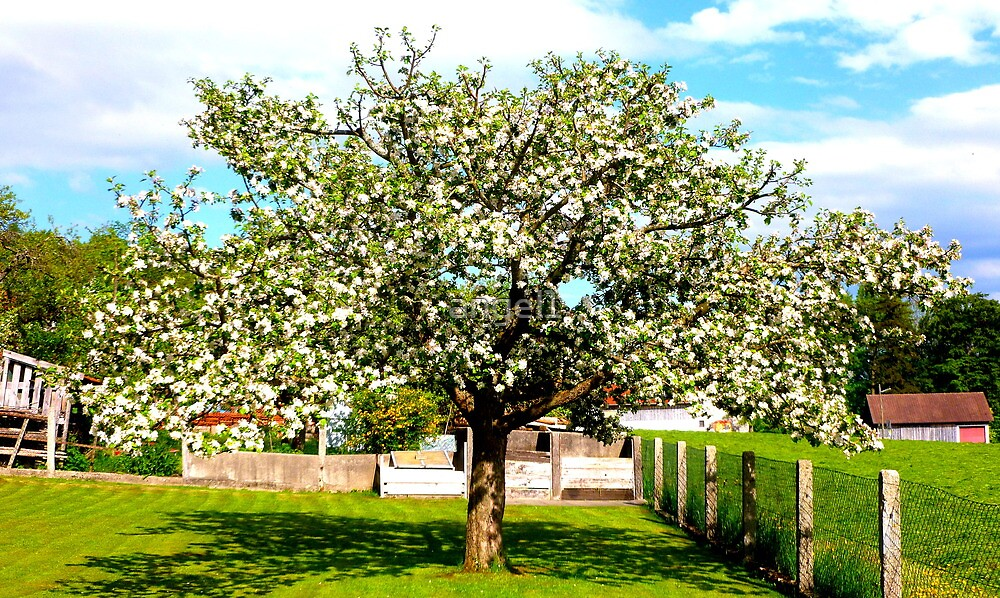 ...why do birds sing...APPLETREE in full bloom by ©The Creative  Minds