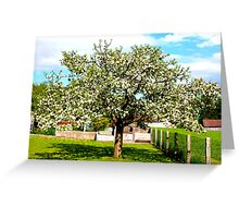...why do birds sing...APPLETREE in full bloom Greeting Card