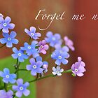 Forget me not by Heather Thorsen