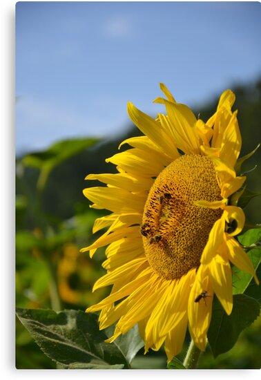 Bee Sunny by BirgitHM