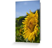 Bee Sunny Greeting Card