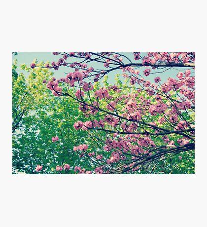 That Summer Feeling Photographic Print