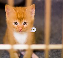 Cute Kitten by CarlH2013