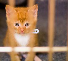 Cute Kitten by CarlH2013