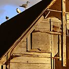 Three Gulls by Tickleart