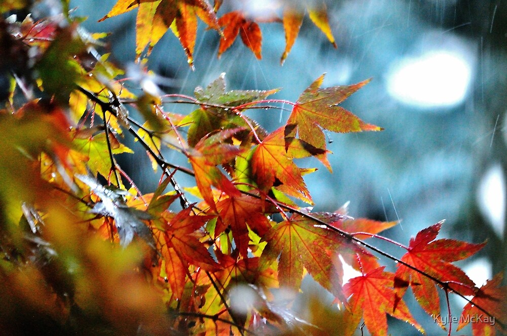 Autumn Leaves. by Kylie Mckay