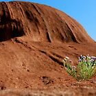 Uluru Bloom by pictureit