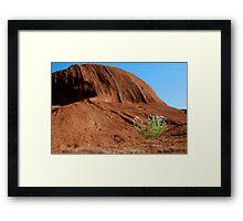 Uluru Bloom Framed Print