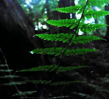 a forest floor by Jenyvive