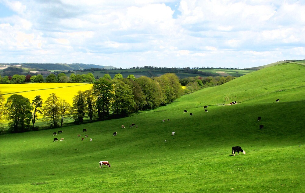 Downland View by Caroline Anderson