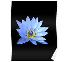 Blue Waterlily Poster