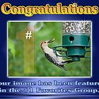 #1 Favorites Group Featured BAnner by imagetj