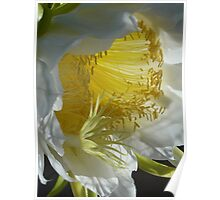 White Night Blooming Cereus Poster