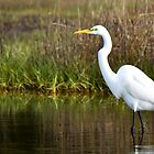 Egret by Mike Oliver