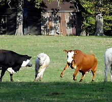 Cattle Herding Cattle by WildestArt