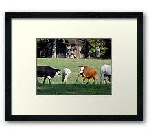 Cattle Herding Cattle Framed Print