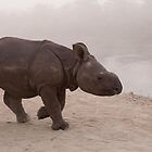 Baby Rhino by Christopher Cullen