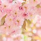 Spring Cherry Blossom by Jacky Parker