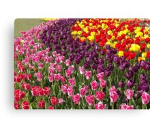 Tulip Garden in the Mid-day Sun Canvas Print