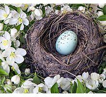 Robin's Nest by Edward Fielding