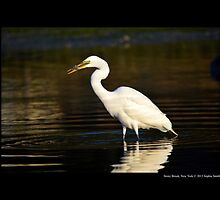 Ardea Alba - Great White Egret Eating Fish In Porpoise Channel - Stony Brook, New York by © Sophie W. Smith