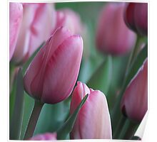 Tulips Squared Poster