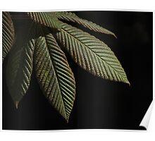 Ridged Leaf Springtime Poster