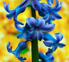 Blue belle by Luke Lansdale
