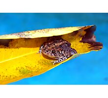 Floating toad Photographic Print