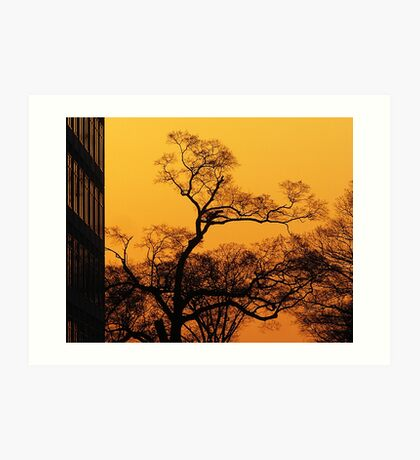 Tree and Morning Sky Art Print