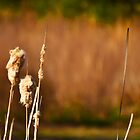 South Carolina Cattails by Mike Oliver